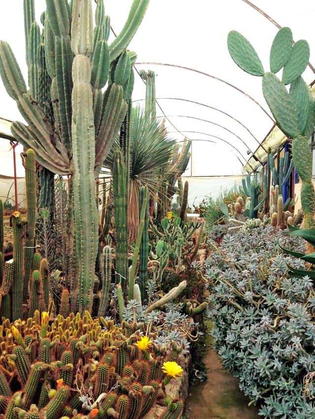 Geninne 39 s art blog la union for Vivero de cactus
