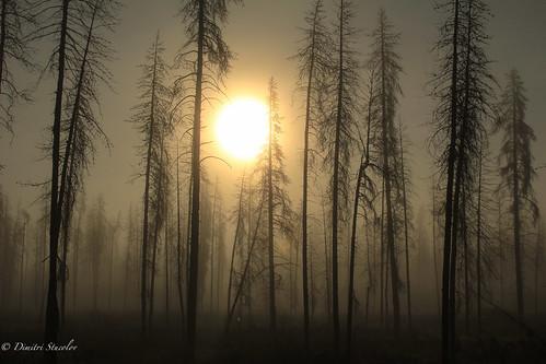trees fog oregon sunrise foggy eerie