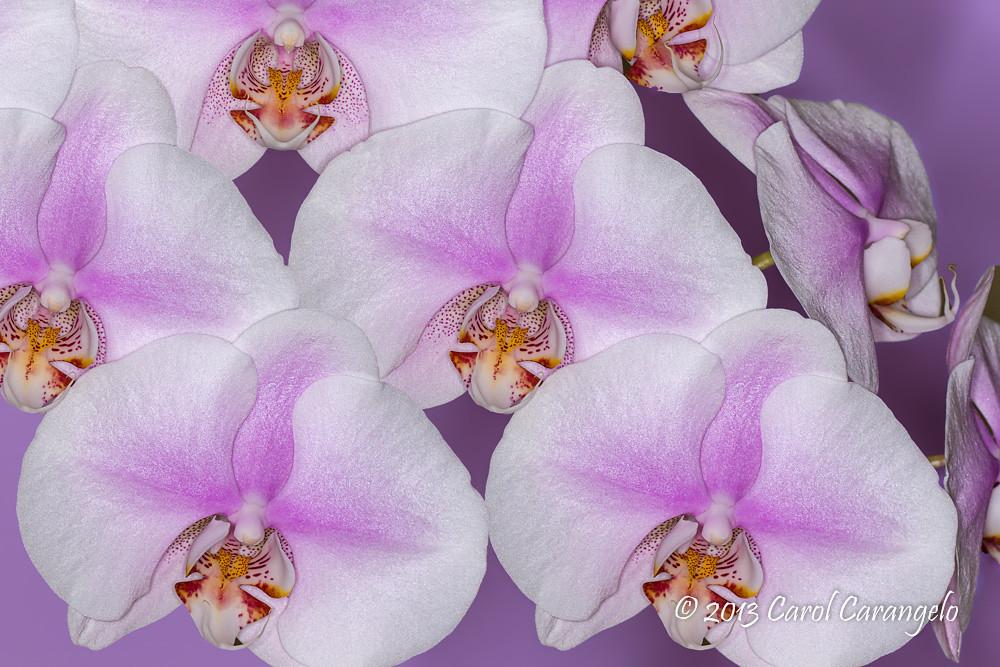IMAGE: http://farm8.staticflickr.com/7303/9565499125_10aa2f7648_b.jpg