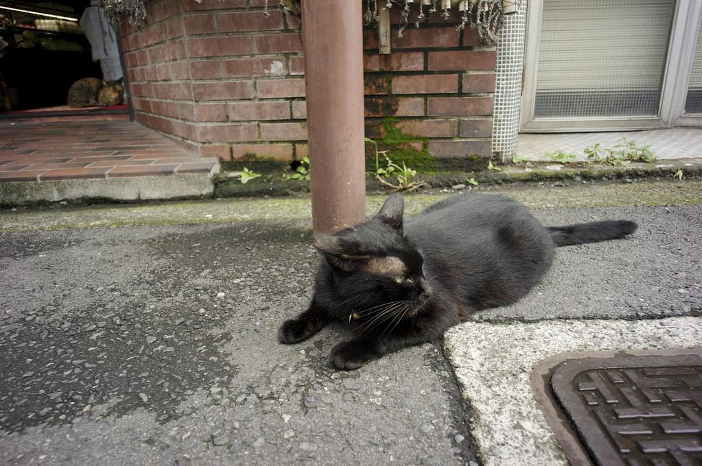 伊東は猫が多かった