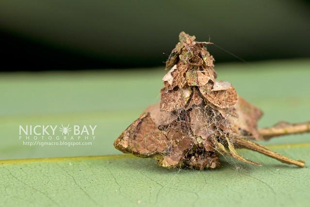 Bagworm moth larva (Psychidae) - DSC_4456