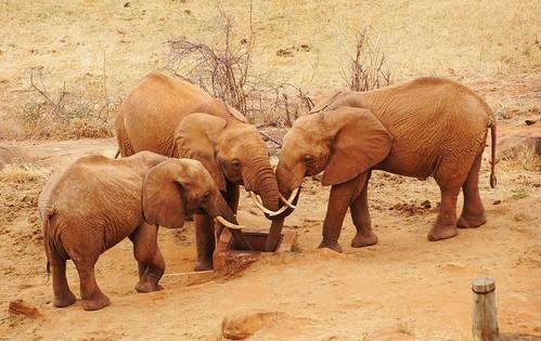 holiday elephant kenya lodge east safari elefant kenia ost tsavo tsavoeast voi kenyaholiday tsavoost voisafarilodge kenyaelephant keniaelefant keniareise