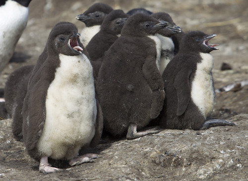 Falklands. by richard.mcmanus.