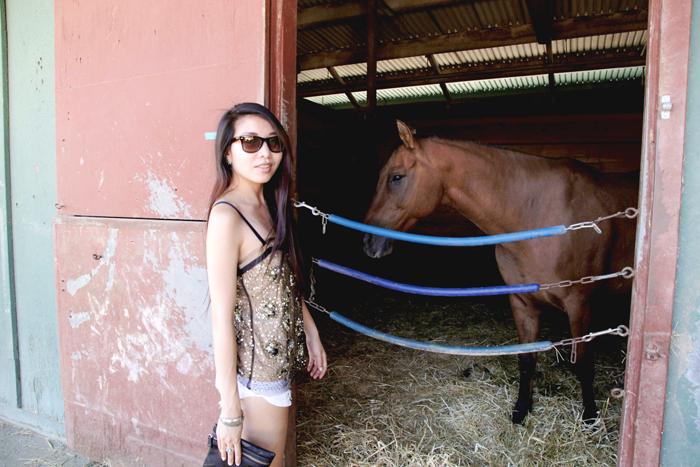 horsey3