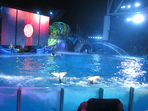 estadio de shamu, seaworld orlando