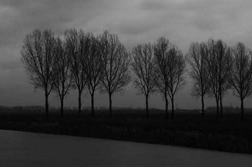 sunset blackandwhite silhouette zonsondergang afternoon zwartwit silhouettes polder noordbrabant poplars namiddag populieren rodewetering nulandsekerkdijk hertogswetering hetlaaghhemael polderhetlaaghhemael hethooghhemaelhethemael brabantsemaaskant