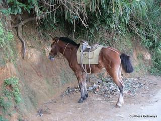 horse-mt-batulao.jpg