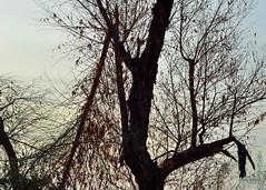 Tree Bones #2