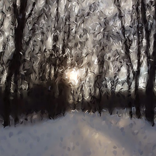 Sun in the trees by @klawrenc
