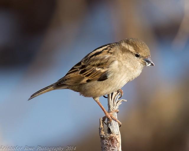 Sparrow 2_23