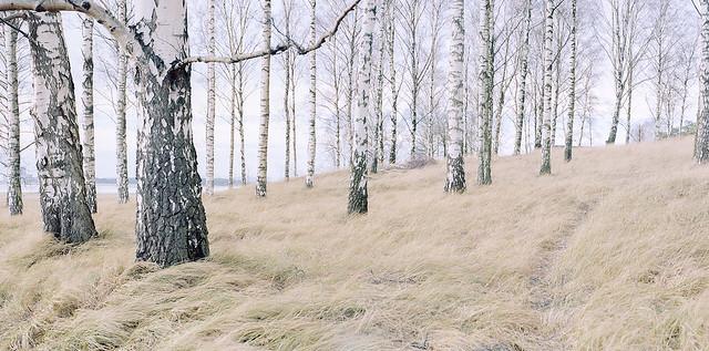 Mamiya RZ67 – C – KodakPortra160 – Salviken I (Stitch)
