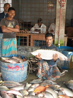 Local auction at a fish market in Arong Ghata, Bangladesh