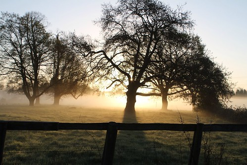 morning sky tree fog sunrise superb walk meditation simply uploaded:by=flickrmobile flickriosapp:filter=nofilter