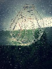 Mérelle N°5 sous la pluie