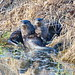 Otters on the bank by jimculp@live.com / ProRallyPix