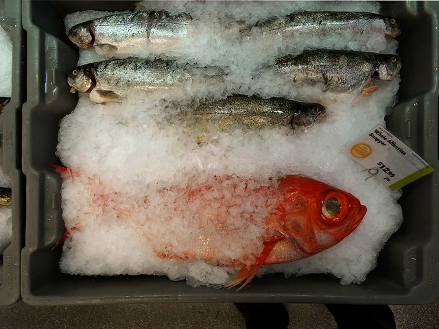 Alfonsino Snapper and Trout in ice chips; Whole Foods, San Francisco (2015)