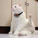 Cat's yoga - 這是一種貓瑜伽的概念