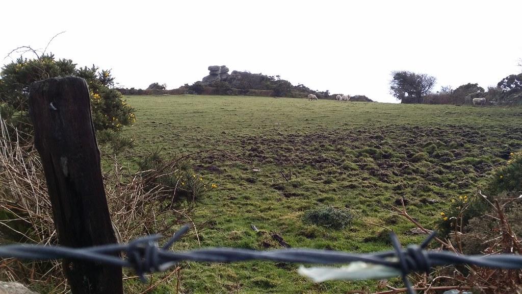 Bel Tor #sh #dartmoor