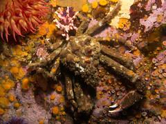 California Marine Life Seascapes