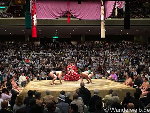 sumo (42 von 53)