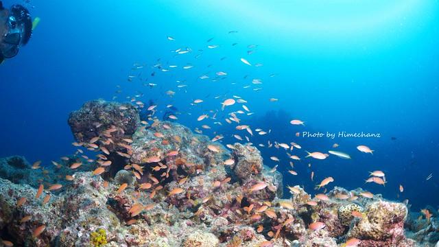 浅場で熱帯魚たちを観察中♪