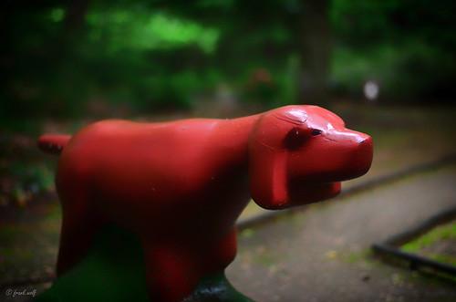Tannenwalds Tierwelt 4