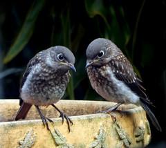 (Best Bird) Honorable Mention - Two Birds - Emilie Villarejos