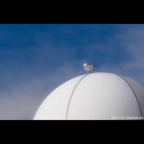 _big_egg by l--o-o--kin thru