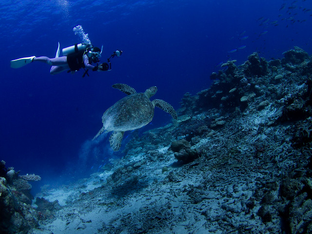 Shooting sea turtle