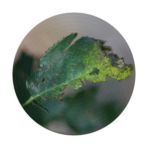 Yucky rose leaf #hg101