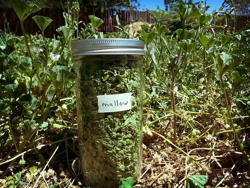 2013.06_mallow harvest