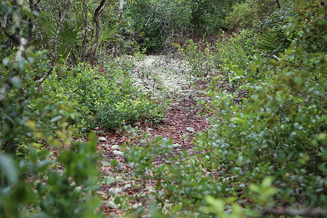 Jacksonville Arboretum Flickr Photo Sharing