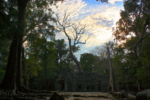 an erie tree rises out of Ta Prohm