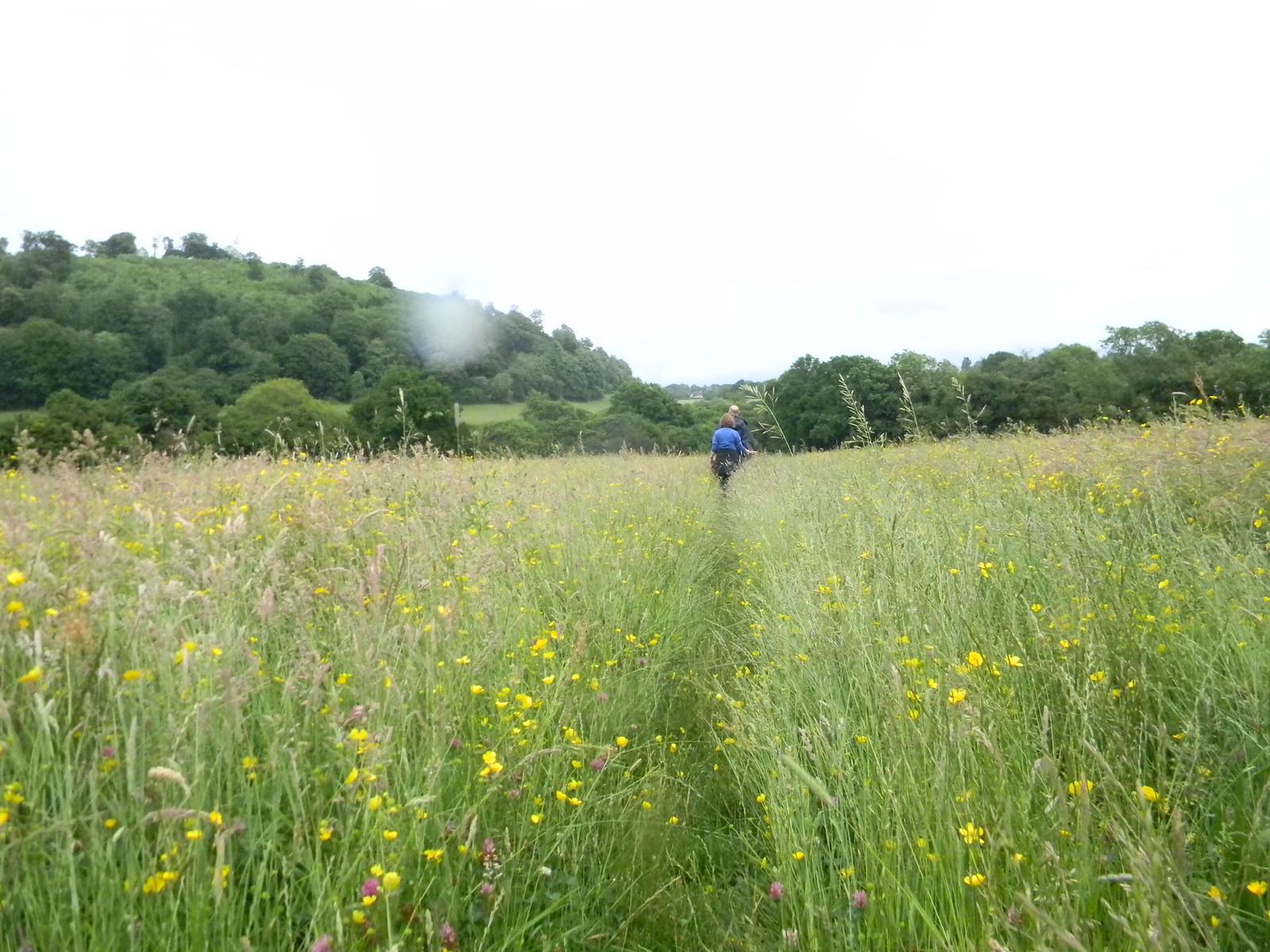 Flower Meadow Petersfield to Selbourne