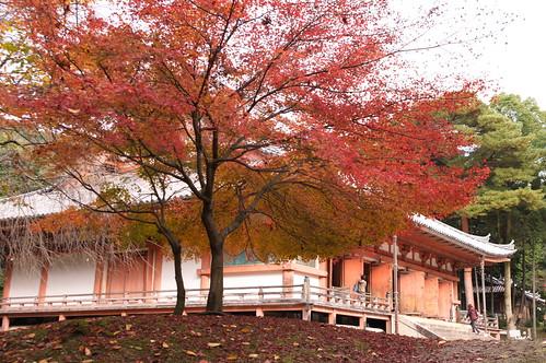 【写真】2012 紅葉 : 醍醐寺/2020-08-07/IMGP6843