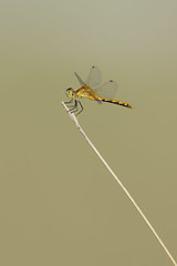 Dragonfly-49109.jpg by Mully410 * Images