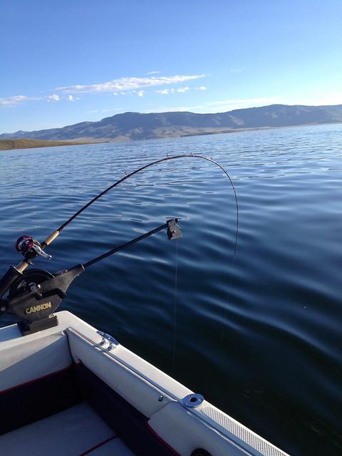Strawberry utah wildlife network for Strawberry reservoir fishing