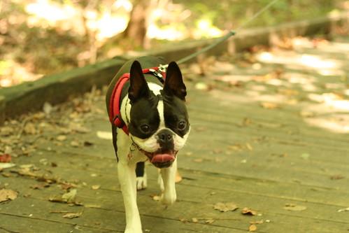 Charlie Poco Hike Sept 8, 2013 (14)