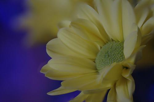 bloem focusstack