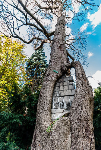 The mystery of the Mt. Pleasant Cemetery brick wall tree - #282/365 by PJMixer