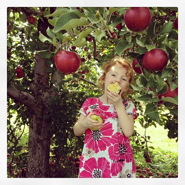 Double fisted at Patterson's Apple Orchard. #apple #orchard #fall #fallinCLE #happyinCLE #apples