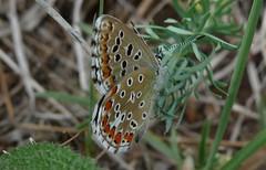 Hungary - Butterflies & Moths