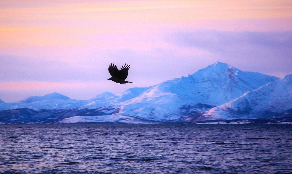 19. Espléndida vista de un fiordo desde la playa de Tromso, en Noruega. Autor, Moyan Brenn