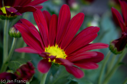 macro_redflower01