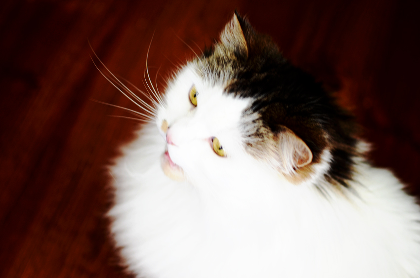 babycat-smiling