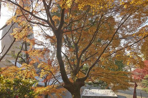 【写真】紅葉 : 霊山観音