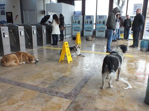 A kutyák bemenekültek a kikőtőbe