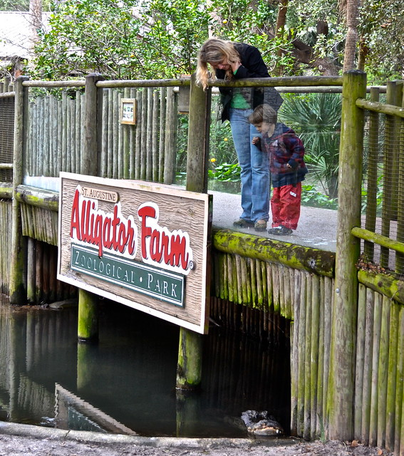 educational travel - learning about alligators