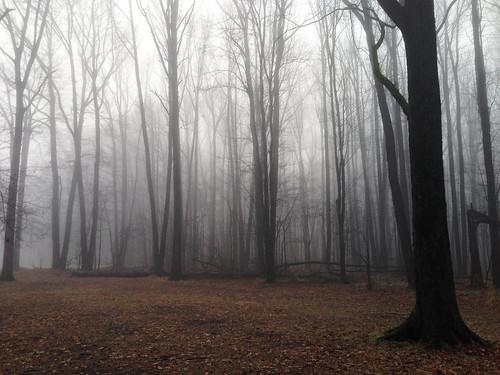 park mist tree leaves fog newjersey kenilworth iphone cranford nomaheganpark