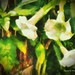Rutland Beauty Flowers (Digital Oil Painting) by charlesw.baileyjr